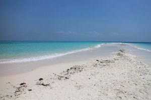Sarasota Sandbar Cruise